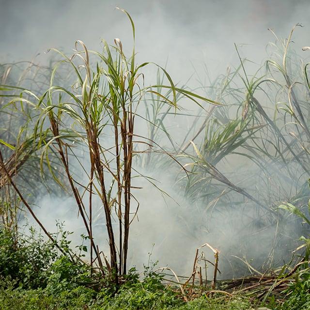 およそ15分から40分で、火は植物の外側の葉を通して燃えます。